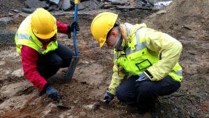 Museoviraston arkeologit tutkivat maata.