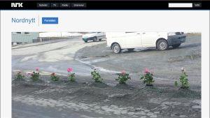Kuvakaappaus NRK:n nettisivulta