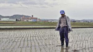 Maanviljelijä seisoo keskellä riisiviljelmää.