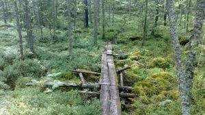 Kuvassa heikkokuntoiset pitkospuut metsässä.