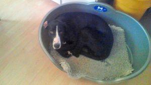 Kadonnut Rippe -koira