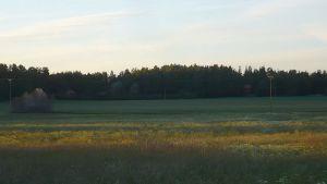 Kesäinen pelto iltavalossa Lahdentakana Hattulassa