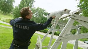 Vanhempi konstaapeli Miikka Ounila ja poliisikoira Jekku etsivät rahaa Yleisradion pihalta 25. kesäkuuta.