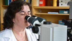 Oikeuslääkäri Pia Wahslten tutkii mikroskooppia.