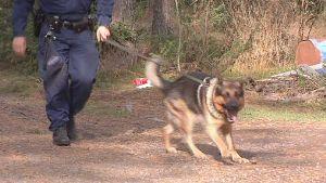 Satakunnassa on kymmenen poliisikoiraa, joista kolme Raumalla. Koirat osallistuvat myös kadonneiden vanhusten etsintään.