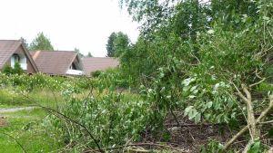 Risukasa puistossa, taustalla pensasaidan takana kolme taloa.