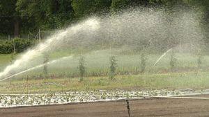 Kuvassa sadettimet kastelevat kuivaa kasvimaata.