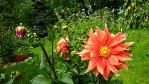 Kukka, kasvit, puutarha, Anjanpuisto