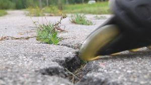 Rullaluistimen pyörä asfaltin halkeamassa