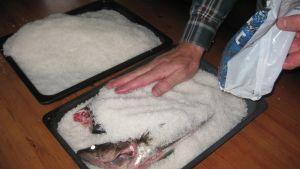 kuha lahna lohi merisuola kalaruoka