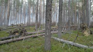 Metsäpalo UKK-puistossa Savukoskella.
