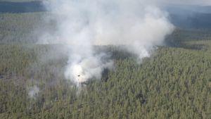 Helikopteri sammuttamassa metsäpaloa UKK-puistossa Savukoskella.
