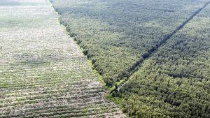 Ilmakuva Indragiri Hulusta, Indonesiasta. Hakatun metsän tilalle on istutettu uusia taimia.