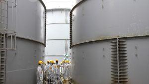 Suoja-asuihin pukeutuneita Japanin ydinturvallisuusviranomaisia Fukushiman Daiichin ydinvoimalassa.