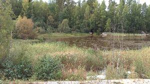 Lievestuoreenjärven lahti.