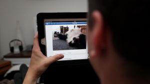 Mies selaa Facebookia iPadilla.