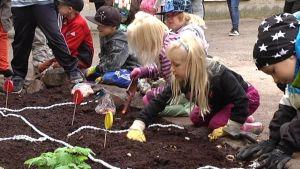 Lapset istuttavat kukkia.