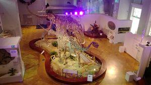 Kuva Luonnontieteellinen museon aulasta, keskellä kaksi hirmuliskon luurankoa