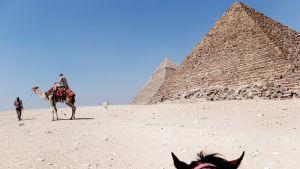 Turisti ratsastaa kamelilla Gizan pyramidien edustalla Egyptissä.