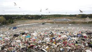 Näkymä jätevuoren laelta