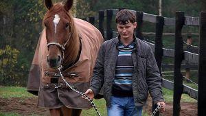 Mies taluttaa hevosta.