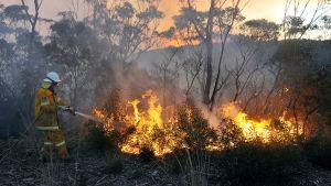 Australialainen palomies sammuttaa pensaspaloa Bellissä.
