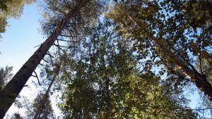 Metsän puita