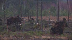 22.12.2013 myrskyn tuhoja Pomarkussa