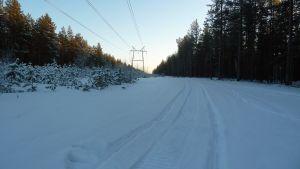 Moottorikelkkaura metsässä