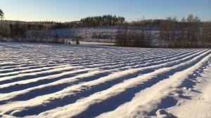 Mansikkamaa lumen alla.