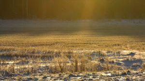 Kuvassa vähäluminen peltoaukeama kevättalven auringossa.