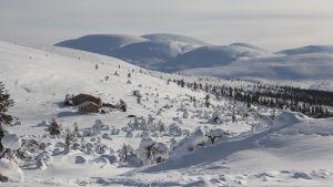 Pallas-Ylläs kansallispuisto