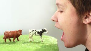Pilaammeko ympäristön ja terveytemme syömällä punaista lihaa?