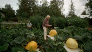 Stillikuva Eedenistä pohjoiseen -elokuvasta.
