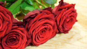 ruusuja Yle Hämeen vahdnvaihdossa