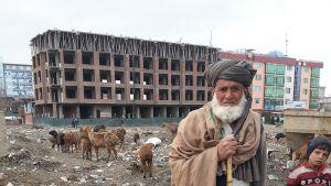 Afganistanilainen paimen lampainensa Kabulissa.