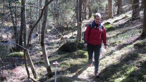 Partiolainen keväisessä metsässä