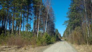 Kuva metsästä Kokkolan asevarikon alueelta.