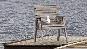 Lokki pesässään tuolilla laiturin päässä.