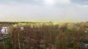 Tuulenpuuska pöllytti puiden siitepölyä Raahessa 19. toukokuuta.
