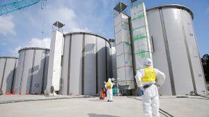 Radioaktiivista jäähdytysvettä varten rakennettuja vesisäiliöitä tsunamissa kärsineen Fukushima Daiichi ydinvoimalan alueella.