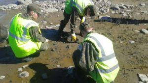 Varusmiehet puhdistavat rantaa Iso-Kraaselissa