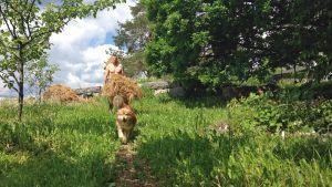 Heinien kuskaus eläimille on jokapäiväistä puuhaa, koira auttaa.