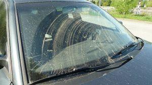 Siitepölyä auton tuulilasilla