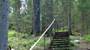Harjateräksestä valmistetut portaat Nuuksion kansallispuistossa.