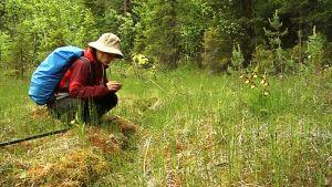 Luontokartoittaja Pia Kangas katselee kasvia