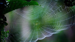 Hämähäkinverkko Nepalilaisessa puutarhassa Katmandussa 16. elokuuta 2011.