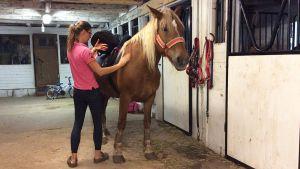 Olga Temonen laittaa hevosta valmiiksi ratsastusta varten.