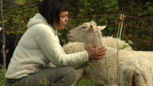 Metsähallituksen lammaspaimen Kuusamon Närängässä. Paimenena Hanna Pesonen Espoosta.