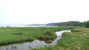 Vesijärven kunnostusta heinäkuussa 2014.